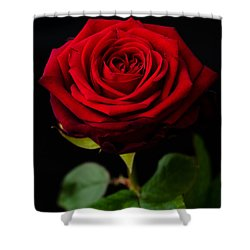 Single Rose Shower Curtain by Miguel Winterpacht