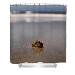 Single Shell Shower Curtain