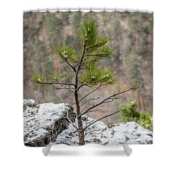 Single Snowy Pine Shower Curtain