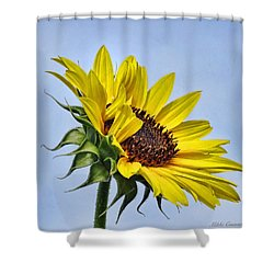Single Sunflower Shower Curtain by Mikki Cucuzzo