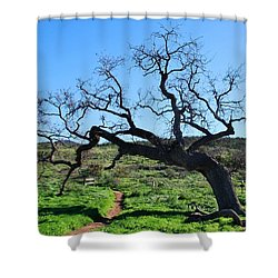 Single Tree Over Narrow Path Shower Curtain