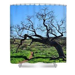 Single Tree Over Narrow Path Shower Curtain