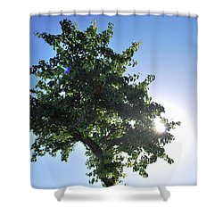 Single Tree - Sun And Blue Sky Shower Curtain by Matt Harang