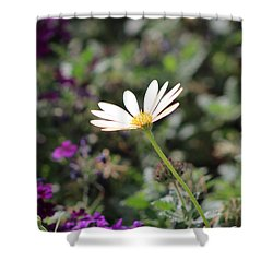 Single White Daisy On Purple Shower Curtain by Colleen Cornelius