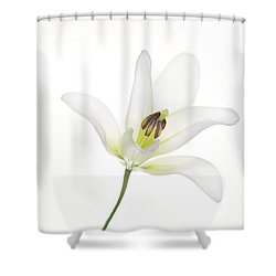 Single White Lily Shower Curtain