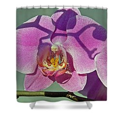 Shower Curtain featuring the photograph Singular Beauty by Lynda Lehmann