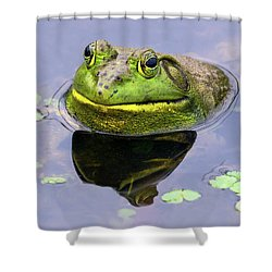 Sir Bull Frog Shower Curtain
