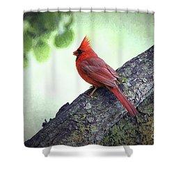 Sir Cardinal Shower Curtain