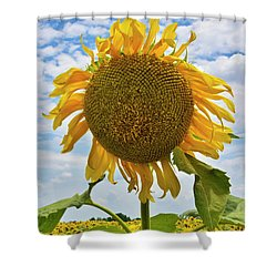 Sister Golden Hair Shower Curtain by Skip Hunt