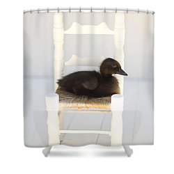 Sitting Duck Shower Curtain by Amy Tyler