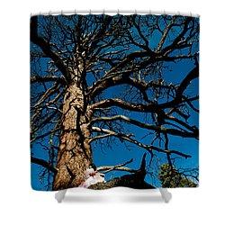 Sitting In Tree 2 Shower Curtain by Scott Sawyer