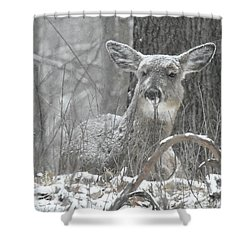 Shower Curtain featuring the photograph Sitting Out The Storm by Michael Peychich