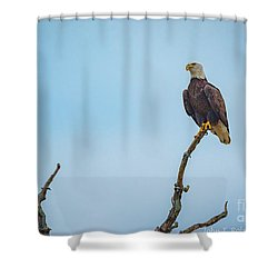 Sitting Patiently Shower Curtain by John Roberts