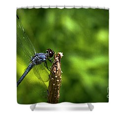 Shower Curtain featuring the photograph Sitting Pretty 2 Dragonfly Art by Reid Callaway