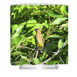 Sitting Pretty Shower Curtain by David Stasiak
