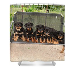 Six Rottweiler Puppies Lined Up On A Swing Shower Curtain by Tracey Harrington-Simpson