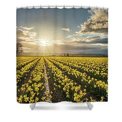 Shower Curtain featuring the photograph Skagit Daffodils Bright Sunstar Dusk by Mike Reid