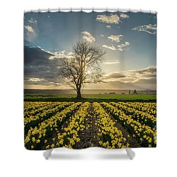 Shower Curtain featuring the photograph Skagit Daffodils Lone Tree  by Mike Reid