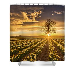 Shower Curtain featuring the photograph Skagit Valley Daffodils Sunset by Mike Reid