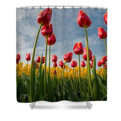 Shower Curtain featuring the photograph Skagit Valley Spring Joy by Dan Mihai