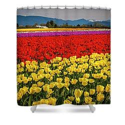 Skagit Valley Tulips  Shower Curtain