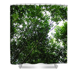 Skagway Green Shower Curtain