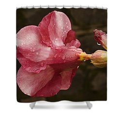 Skc 3253 Shades Of Allamanda Shower Curtain