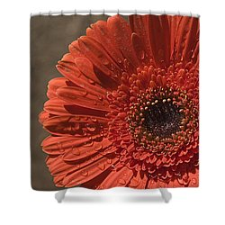 Skc 5127 The Heart Of The Gerbera Shower Curtain by Sunil Kapadia