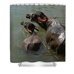 Skc 5603 The Coolest Way Shower Curtain by Sunil Kapadia