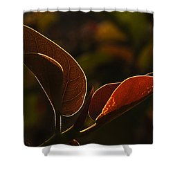 Skc 9841 Lovable Pair Shower Curtain by Sunil Kapadia
