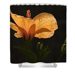 Skc 9937 The Grace Of Hibiscus Shower Curtain by Sunil Kapadia