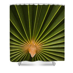 Skc 9959 The Palm Spread Shower Curtain by Sunil Kapadia