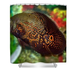 Shower Curtain featuring the photograph Skeeter by Betty Northcutt