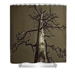 Skeletal Tree Sedona Arizona Shower Curtain