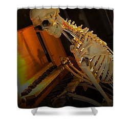 Skeleton Musician Shower Curtain by Bob Pardue