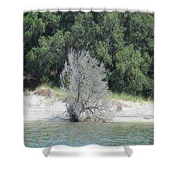 Skeleton Tree On The Beach Shower Curtain