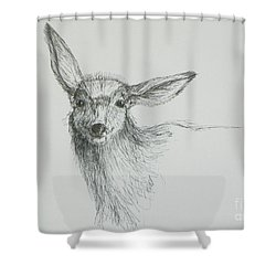Sketch Of A Mule Deer Doe Shower Curtain by Dawn Senior-Trask