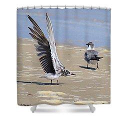 Skiddish Black Tern Shower Curtain