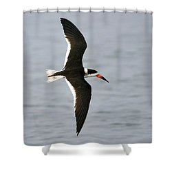 Skimmer In Flight Shower Curtain by Al Powell Photography USA