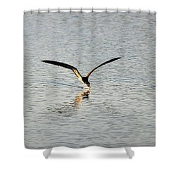 Skimmer Skimming Shower Curtain by Al Powell Photography USA
