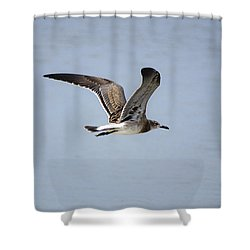 Skimming Seagull Shower Curtain