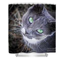Shower Curtain featuring the photograph Skitty Green Eyes by Cheryl McClure