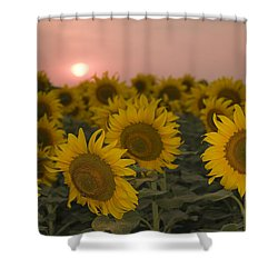 Skn 2178 The Sunflowers At Sunset  Shower Curtain by Sunil Kapadia