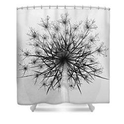 Sky Doily  Shower Curtain by Tim Good
