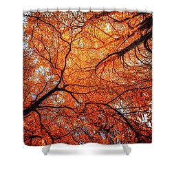 Sky Roots In Forest Red Shower Curtain