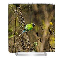 Slaty-headed Parakeet Shower Curtain
