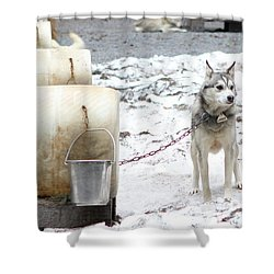Shower Curtain featuring the photograph Grant by Brandy Little