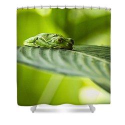 Sleeeepy Shower Curtain