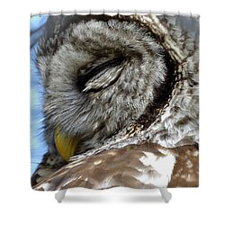 Shower Curtain featuring the photograph Sleeping Barred Owl by Rebecca Overton