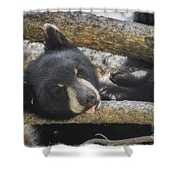 Shower Curtain featuring the photograph Sleeping Bear Cub by Mitch Shindelbower